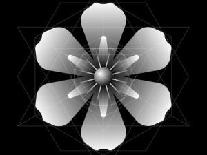 Génesis de Organizaciones radiales de múltiplos 3 y 4.